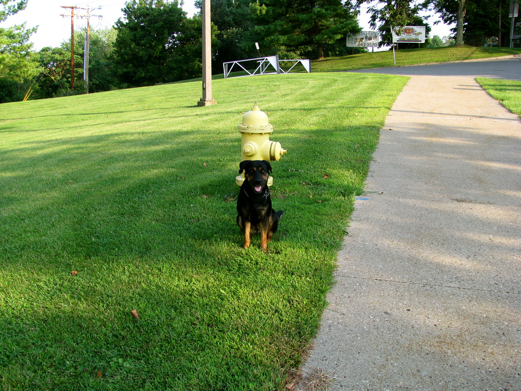 puppy fire hydrant